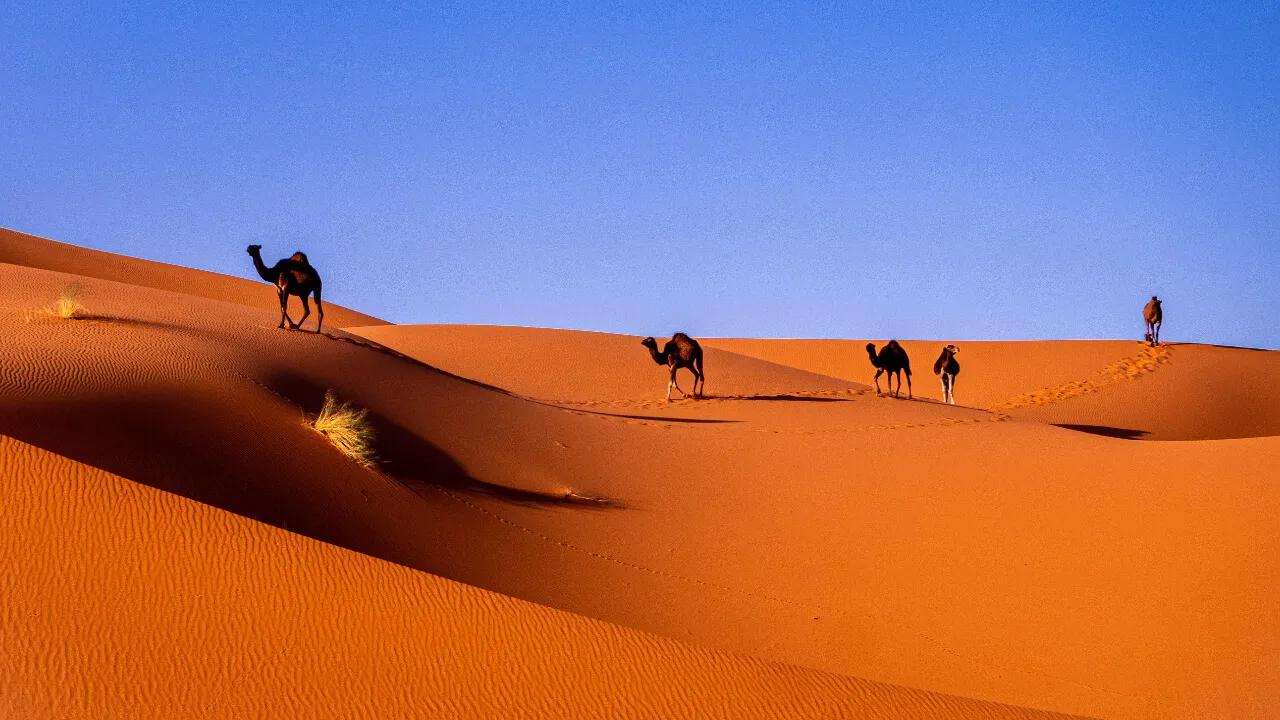 Die beste SIM-Karte für Marokko